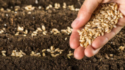 Testimonianza CAC Seeds